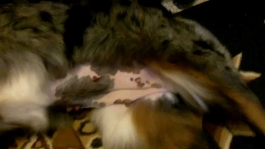 Callie's Pregnancy Week 4 Youtube. Dog 3 Weeks Pregnant