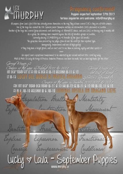 Puppy Plans | Lex Murphy