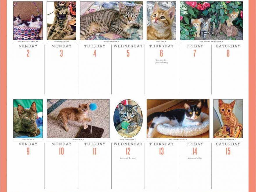 365 Days Of Kittens Deluxe Calendar 2020 At Calendar Club