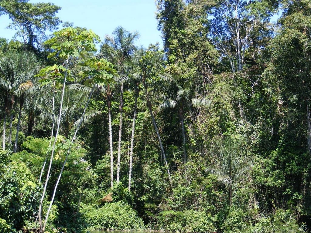 Amazon Rainforest : Images - History - Biodiversity - Xcitefun