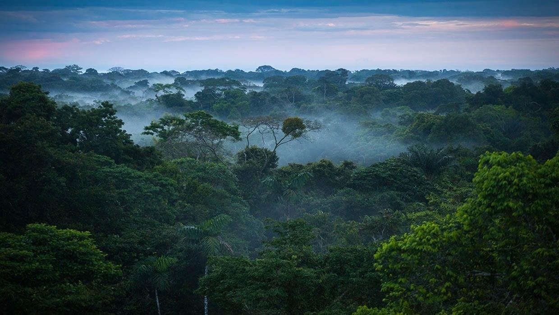 Amazon Rainforest When To Go - Rainy Season, Weather, Wildlife, Advice