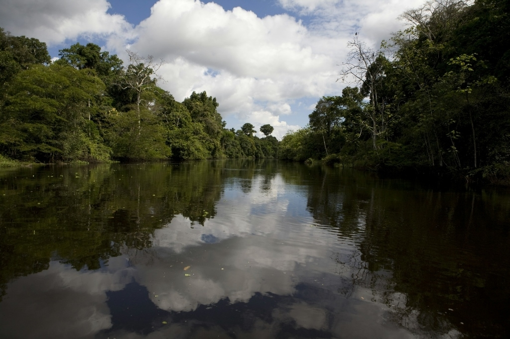 What Amazon Rainforest In Peru Offers To You   Www.viharin